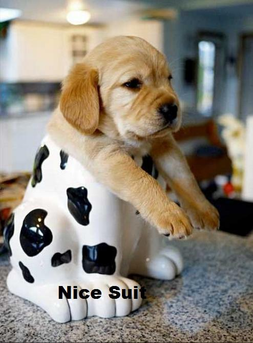 Puppy enclosed in tight suit