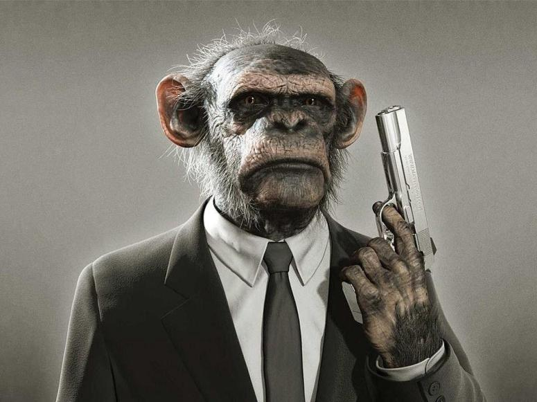 Chimpanzee looking like MI 6 agent