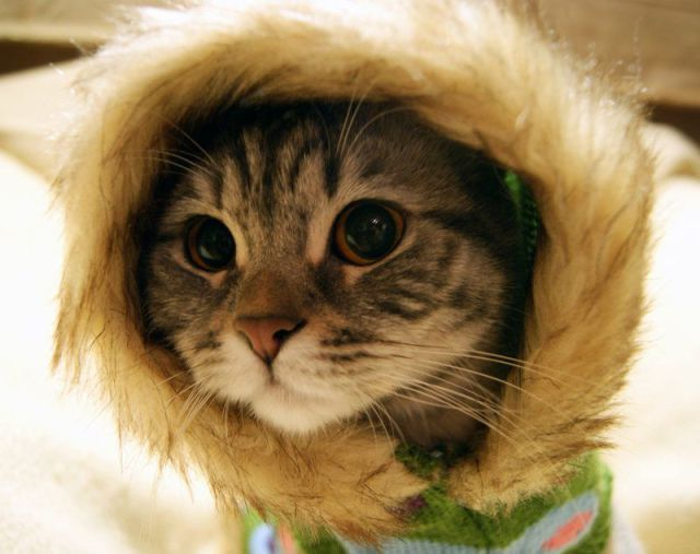 Very Cute Cat pic : nice clothes