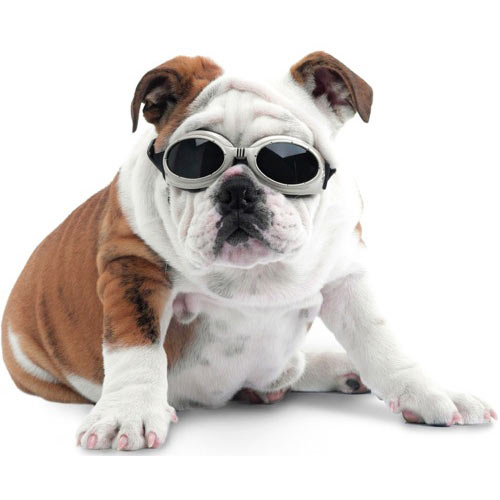 Doggles : goggles for dogs