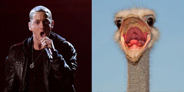 Eminem and Ostrich