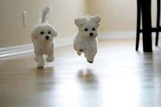 puppyjumping