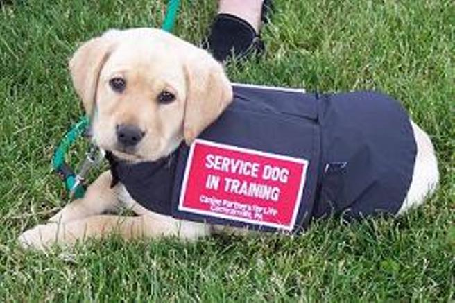 Service dogs doing a great job