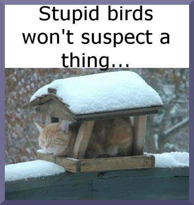stupidbirds